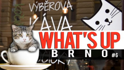 Video: Visit Brno's first cat cafe