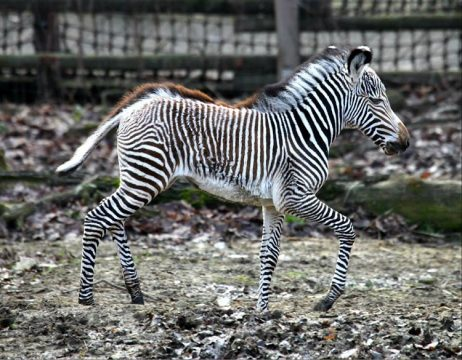 Zoo Brno welcomed first newborn of 2018 in January