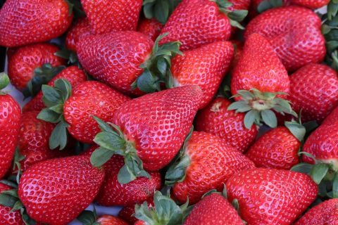 'Pick-your-own' strawberry farms now open in South Moravia
