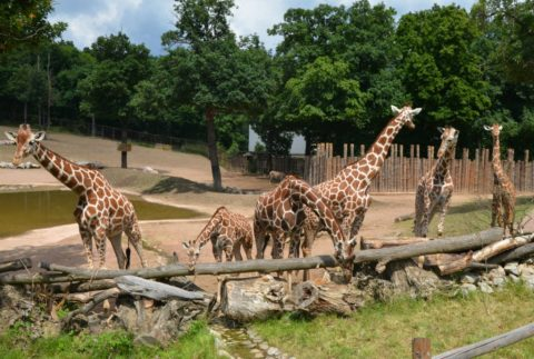 New Attractions Coming to Brno Zoo