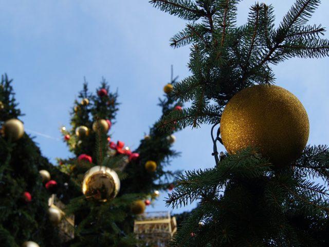 Brno's Christmas Tree to Be Transported from Bílovice to Náměstí Svobody by Horse-Drawn Carriage