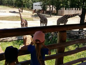 Brno Family: Brno Zoo Through the Eyes of Toddlers