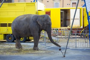 People Do Not Agree to Rent Urban Land to Circuses