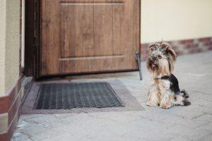 Alert Citizen Rescues Forgotten Dog