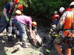 Brno Firefighters Rescue Horse Stuck in Swamp