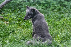 Brno Zoo Adds Online Donation Tool Following Rise In Animal Population