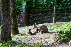 Visitors Showed Huge Support For Brno Zoo in 2020