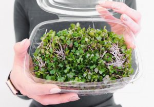 A Homegrown Response to the Ecological Crisis: Brno's Very Own Microgreens
