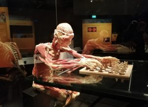 Body Worlds: An Interactive Exploration Of Human Life