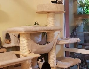 International Cat Day: An Interview With Brno's LuckyCats Shelter