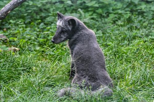 Brno-zoo-Credit-KB-Brnodaily (13)