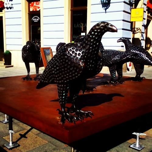 birds-flock-šilingrovo-brnodaily